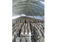 菌棚专用膜 (3)